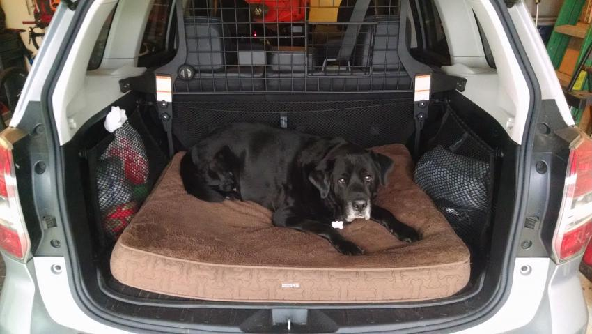 Dog Friendly Trunk Gen4 Outback Vs Forester Subaru Forester