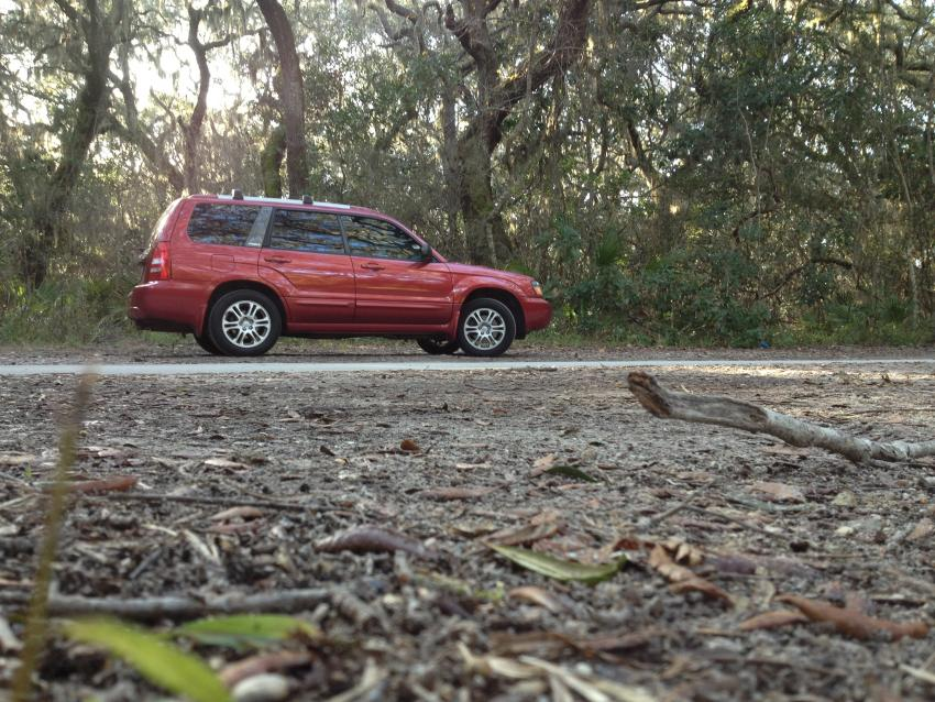 Red Forester Pictures-photo-1.jpg