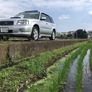 Rice paddy Scooby