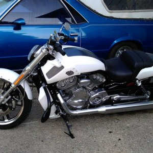 my vrod muscle